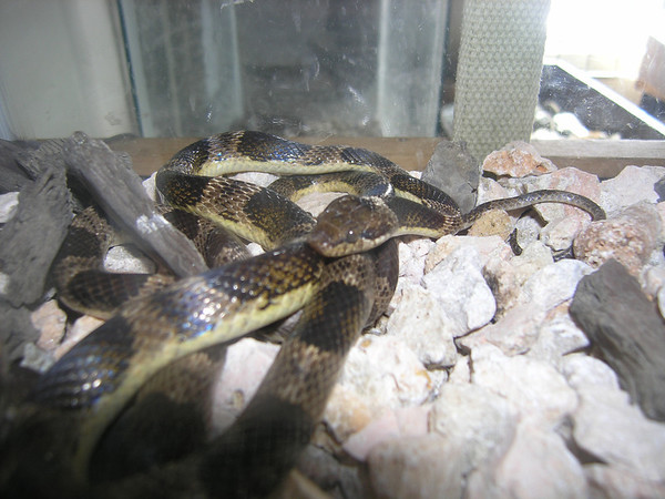 Snake at the Arikok National Park Visitor Center