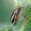 Beetle on plant