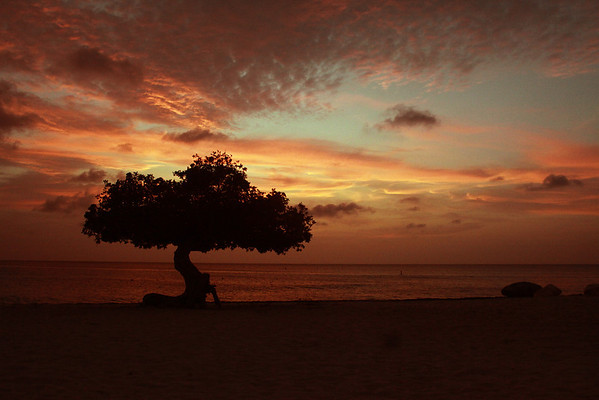 Sunset with fofoti tree