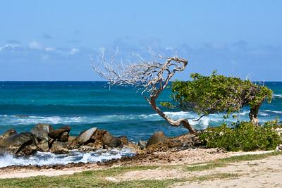 Aruba 1-2007 333