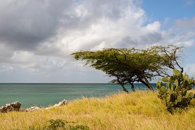 Aruba 1-2007 013