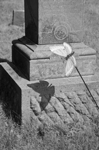 Cemetery - a butterfly leaves its mark