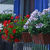 Flower planter hanging outside a house in Ascona, Switzerland.