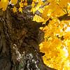 0910_Foliage 2009_034