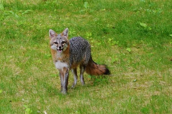 """""""Wildlife""""  8/5/2015"""
