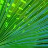 Azulverde