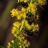 Bee Condo-010088