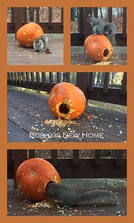 Bushy's New Home