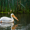 Bird in California Swamp-