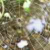 """""""Spyder Web"""""""