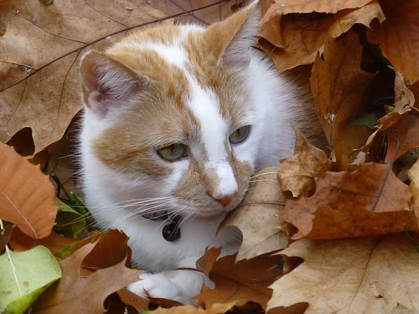 """Leaf Peeper""<br /> New Boston, NH"