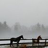 10  Horses