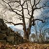 Old Tree - RL