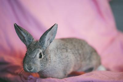 Bunny-04