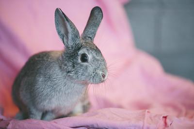Bunny-06