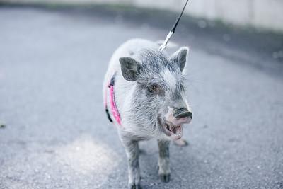Piggy-01