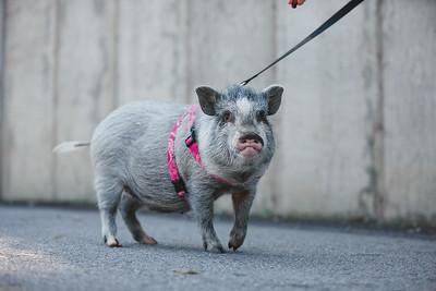 Piggy-03