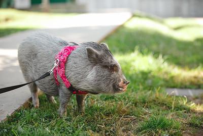 Piggy-04