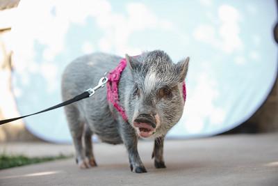 Piggy-05
