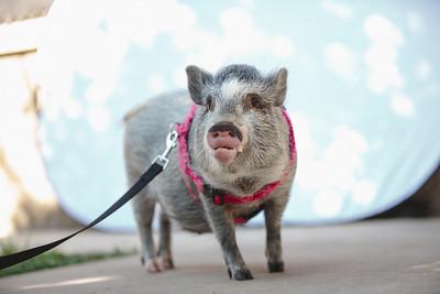 Piggy-07