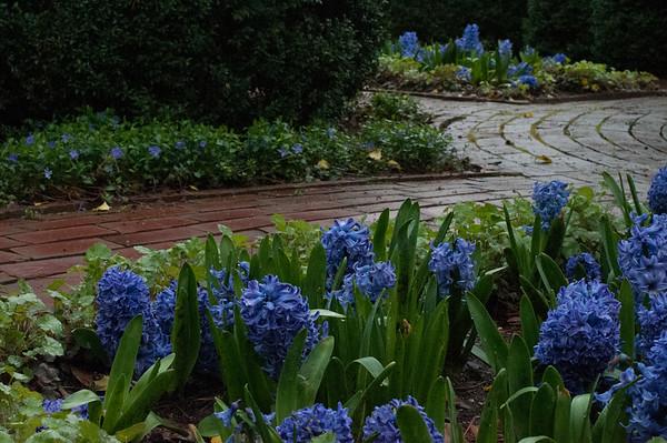 Ashland Garden... It's Spring!