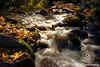 Ashland Creek Autumn Shine