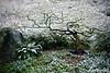 Spring Snowshower