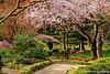Japanese Garden Springtime