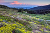Mt Ashland Widlflower Sunset