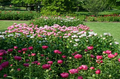 Ashland Peony Garden