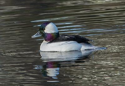Ashland Pond: 3.18.16