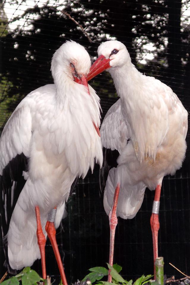 """""""Love Birds"""" (c) 2008 Digital image 18.5""""x25"""" on Velvet Fine Art paper"""