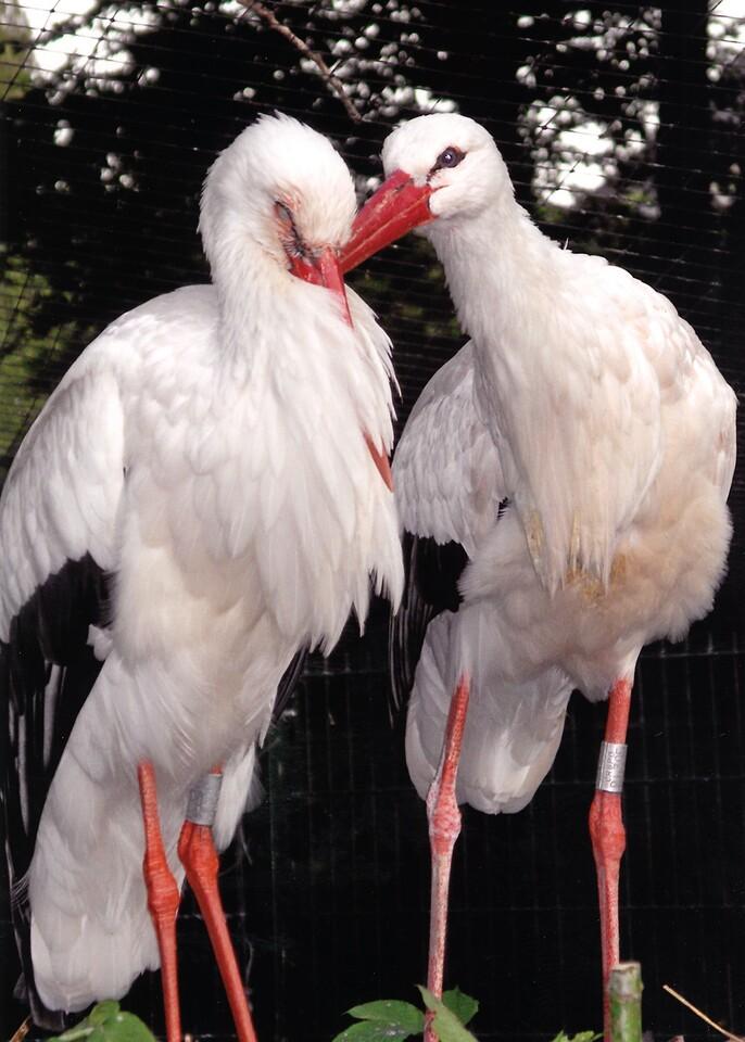 Love Birds, Parc L'Orangerie, Strasbourg (2008)