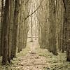 Dockey woods