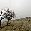Double tree, Pitstone Hill, Ashridge, England, UK