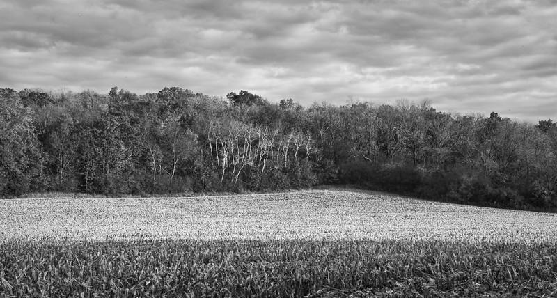 Farm fields - cornrows in fall looking southeast - 1