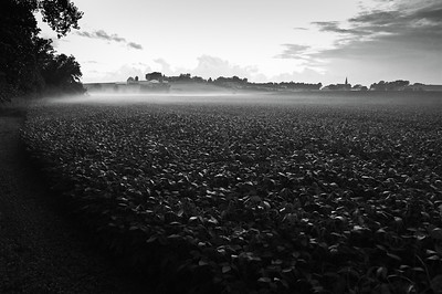 Farm fields - fog settling in for the night in August - 1