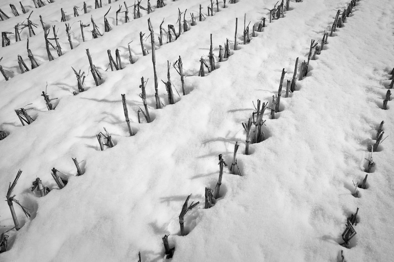 Farm fields - cornrows in winter - 1