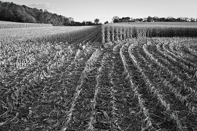 Farm fields - cornrows in fall looking south