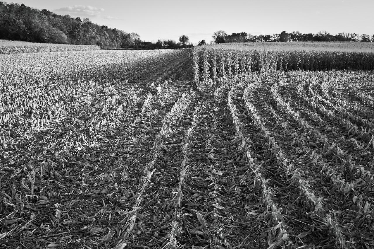 Farm fields - cornrows in fall looking south