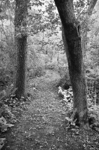 "Woods - ""5-acre"" woods path - 1"