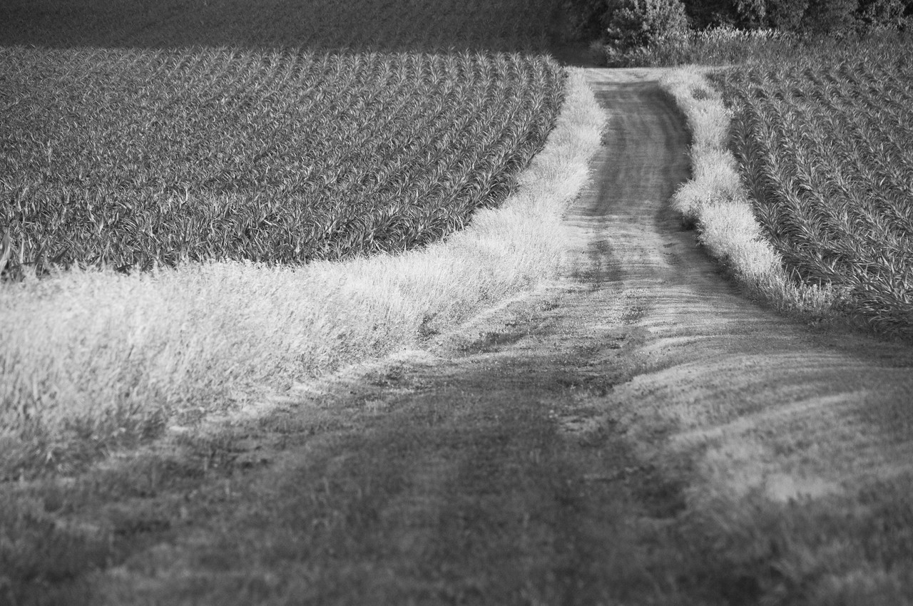 "Farm fields - field road leading south to ""5-acre"" woods in summer"