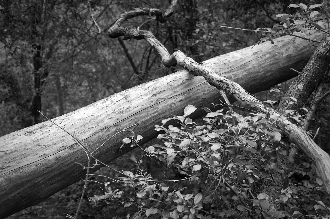 """Woods - """"5-acre"""" woods fallen timber"""