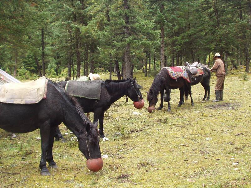 horse08.jpg