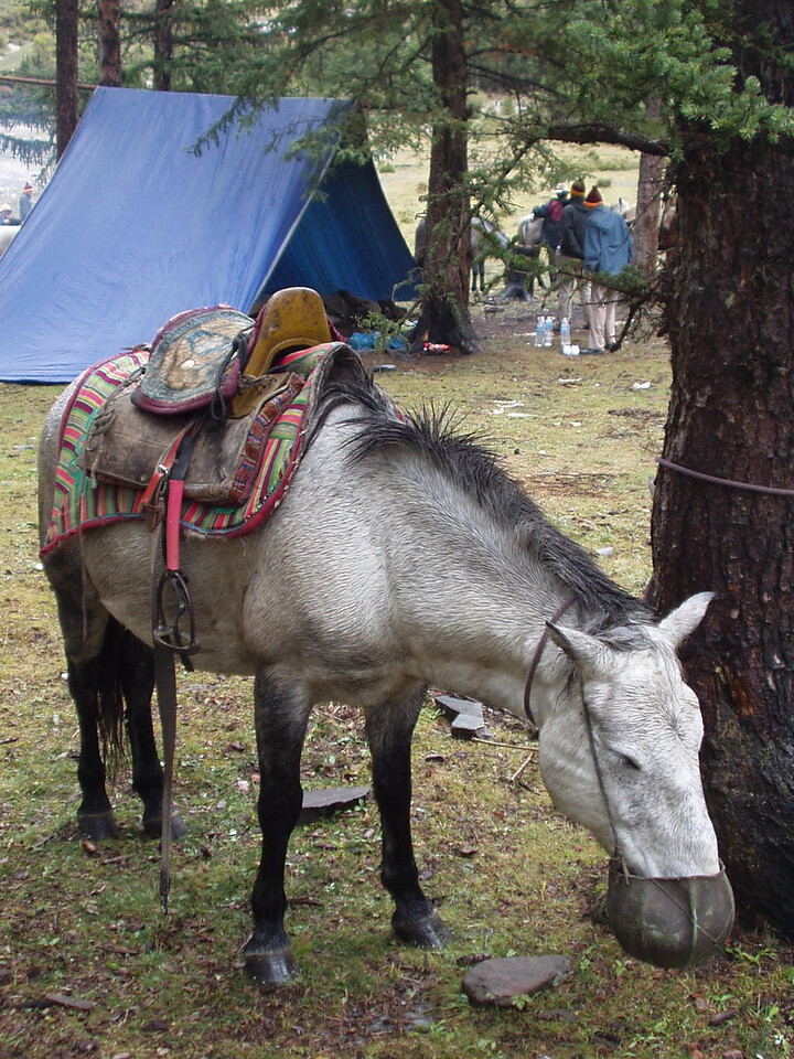 horse09.jpg