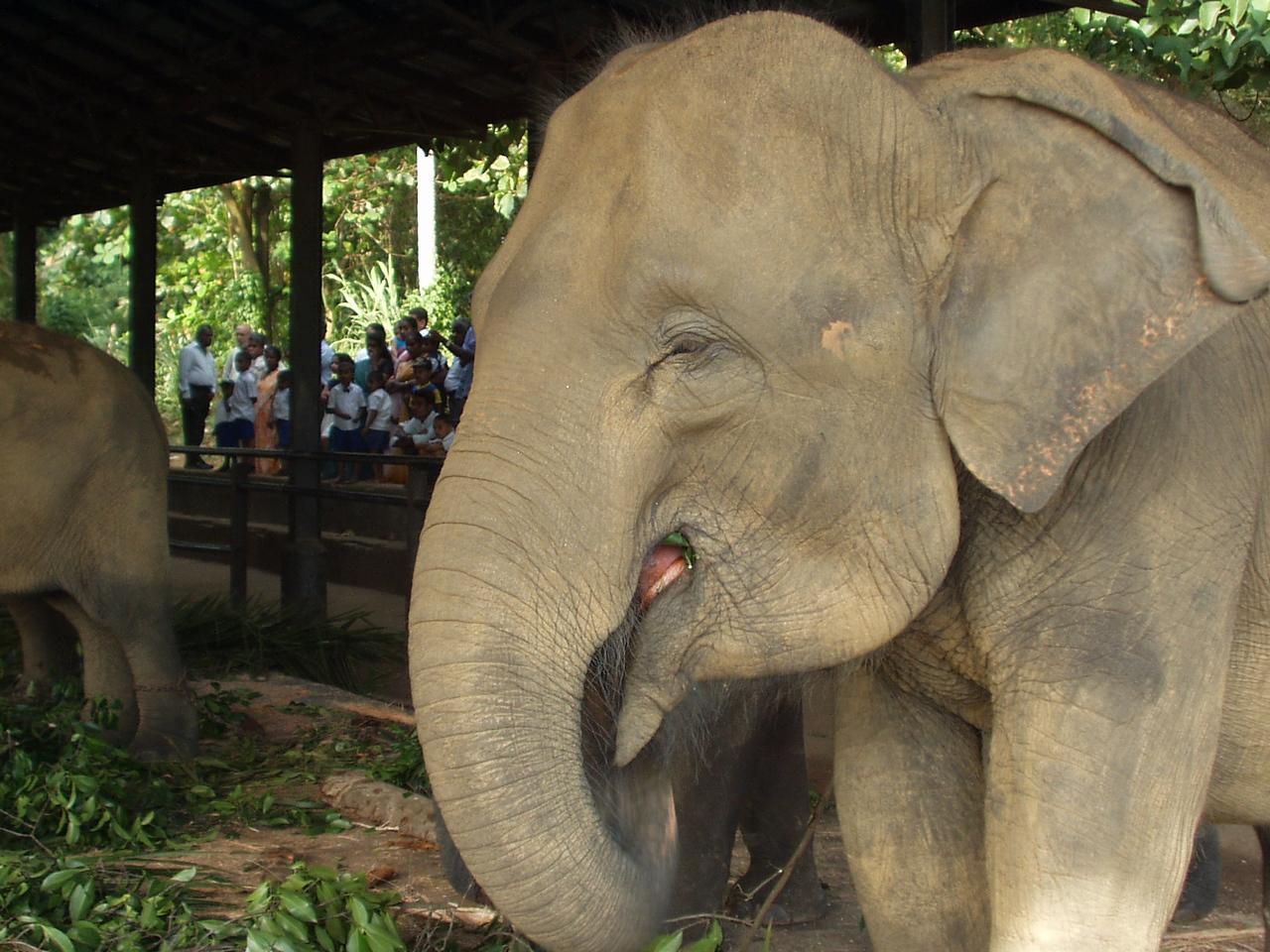 elephants09.jpg