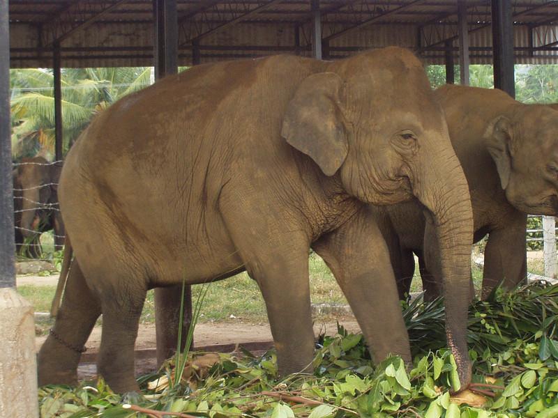 elephants01.jpg