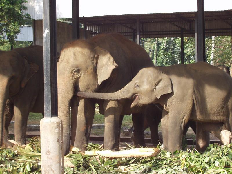 elephants05.jpg