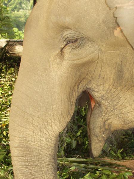 elephants08.jpg