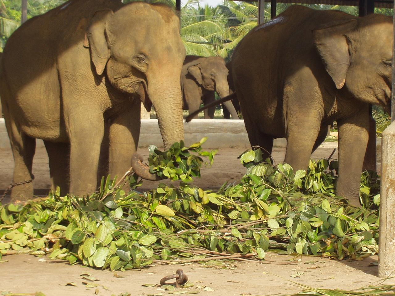 elephants03.jpg
